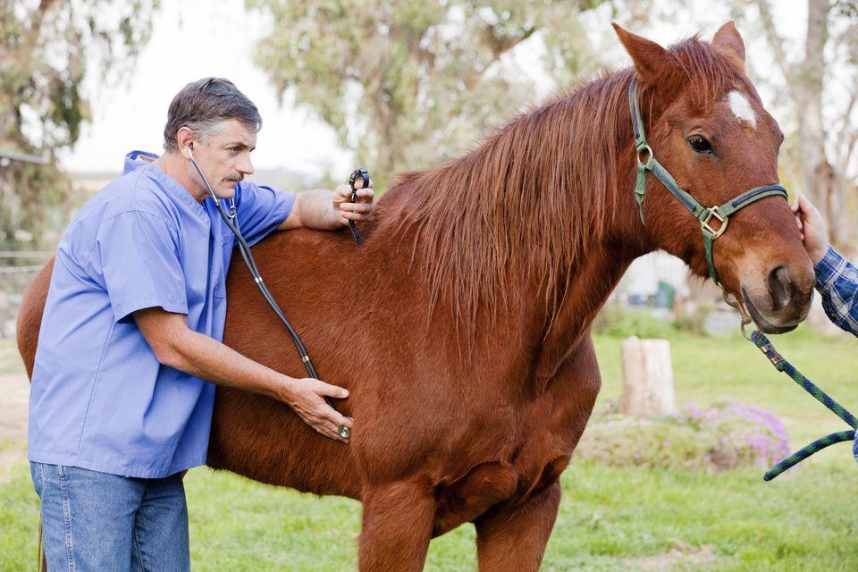 Horse-health-care