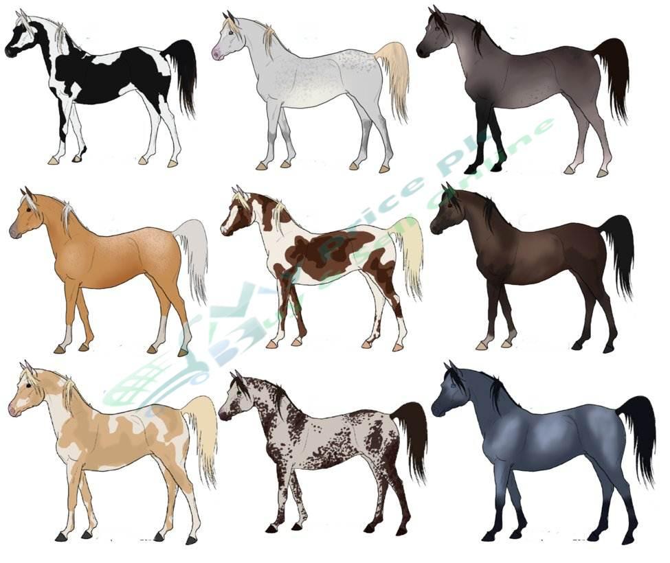 Popular-Horse-Breeds