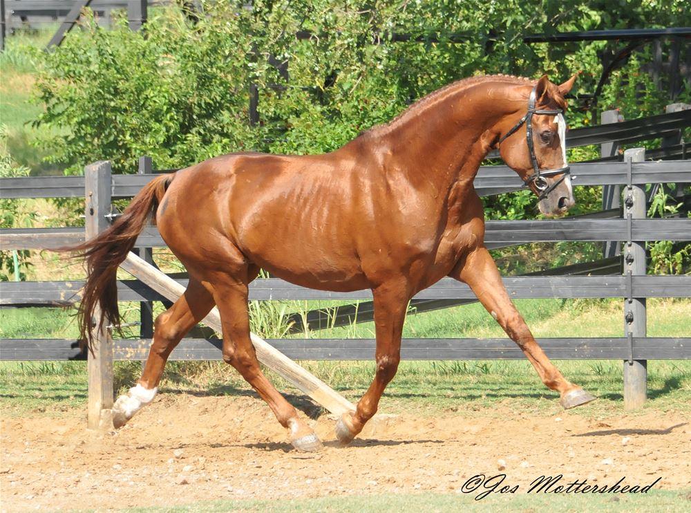 Horse-Temperament