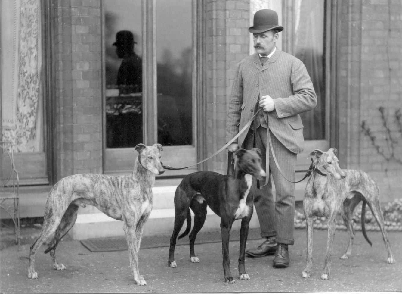 History-of-The-Greyhounds